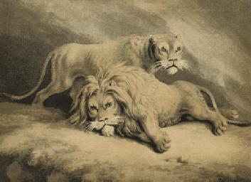 Studies of lions