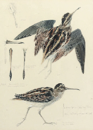 Study of a snipe