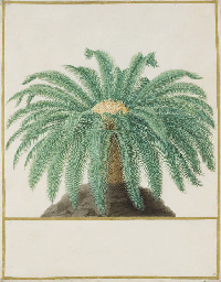 Study of a palm tree