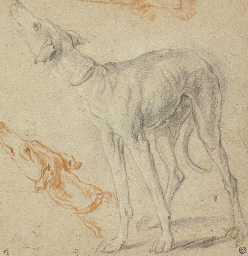 Two studies of a greyhound