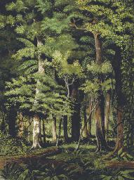 A Brazilian jungle (recto), A
