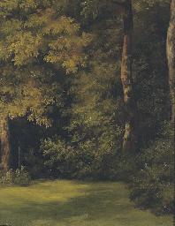 Fallen tree trunks on a forest