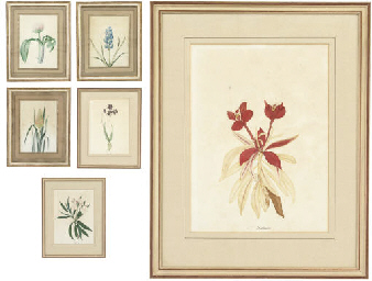 Six botanical watercolours, in