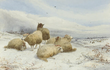 A flock of sheep in snow-cover