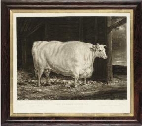 The Durham White Ox
