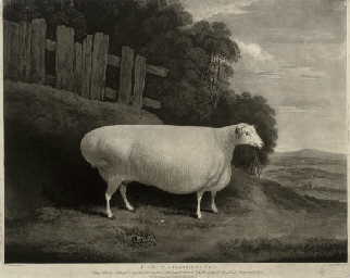 The Worcestershire Ewe
