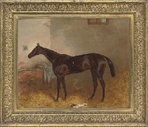 A favourite racehorse