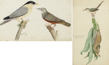 Two paintings of birds