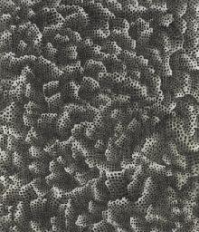 Infinity-Nets
