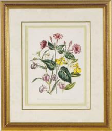 [Garden flowers]: Five Plates