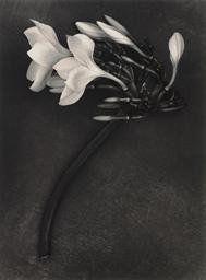 Orchid, St. John, U.S. Virgin