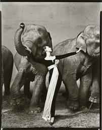 Dovima with elephants, Cirque