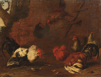 Roosters fighting in a landsca