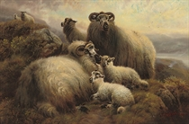 Lambs and ewes on a hillside