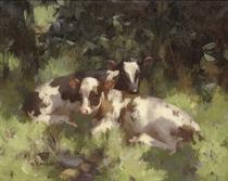 Calves resting