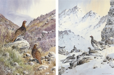 Ptarmigan; and Red Grouse