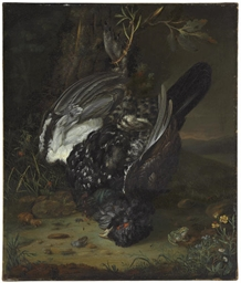A blackcock in a wooded landsc