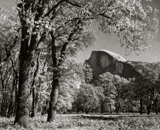 Half Dome, Oaks, Autumn, Yosem