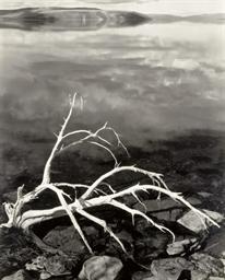 White Branches, Mono Lake, Cal