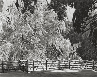 Trees and Fence, Winter, Yosem