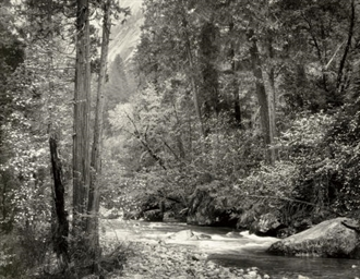 Tenaya Creek, Dogwood, Rain, Y