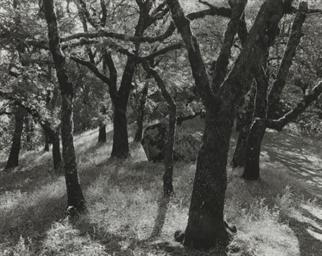 Trees, Castle Rock State Park,