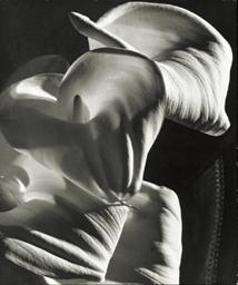 Calla Lily, c. 1945