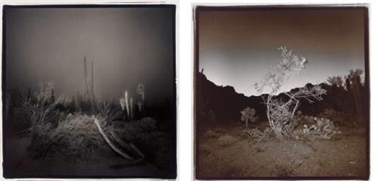 Cardon Cactus in Fog, 1976; Bu