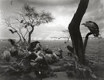 Hyena-Jackal-Vulture, 1976