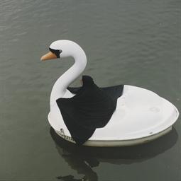 Swan Rider