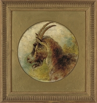 Head of a billy goat