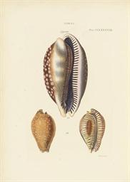 REEVE, Lovell Augustus (1814-1