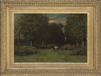 A cow in a woodland clearing