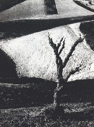 On Being Aware of Nature, 1954