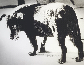 Stray Dog, Misawa, 1971