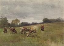 Cattle grazing, Kilmurry