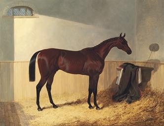G.W. Gratwicke's bay colt The