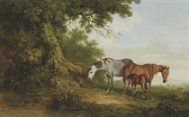 Mares and a foal in a wooded landscape