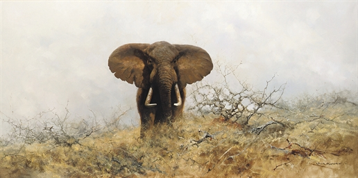 Lone bull elephant