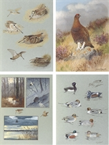 An album of watercolours of game birds and wildfowl