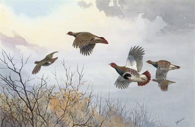 Partridge in flight over trees
