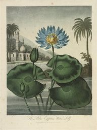 The Blue Egyptian Water-Lily,
