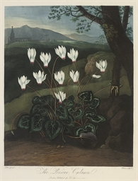 The Persian Cyclamen, by Elmes