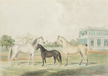 Horses and a foal infront of G
