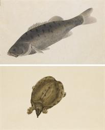 A carp; and A turtle