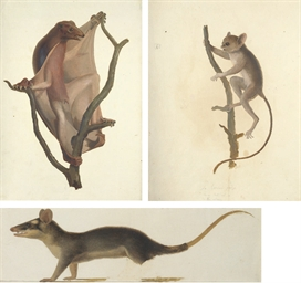 Studies of Asian mammals inclu