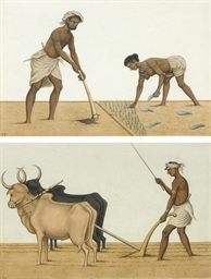 Labourers planting rice seedli