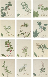 Twelve botanical studies inclu