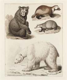 Study of four quadrupeds: an A