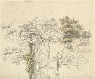 Study for a tree, possibly at